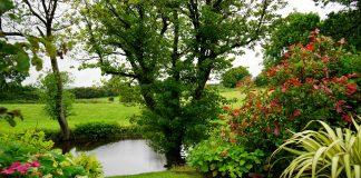 Vijver-tuin