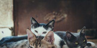 Verzorging-katten